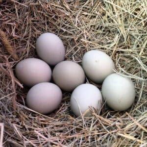 Fresh Eggs – Farm Stand Pick Up